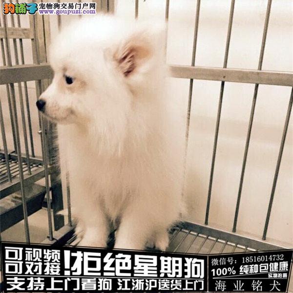 cku认证犬舍出售极品银狐 犬签协议保健康