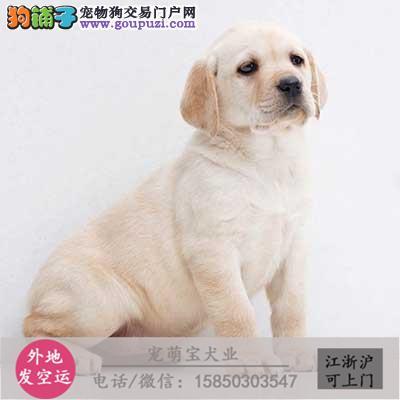 cku认证犬舍出售极品斑点狗 签协议保健康