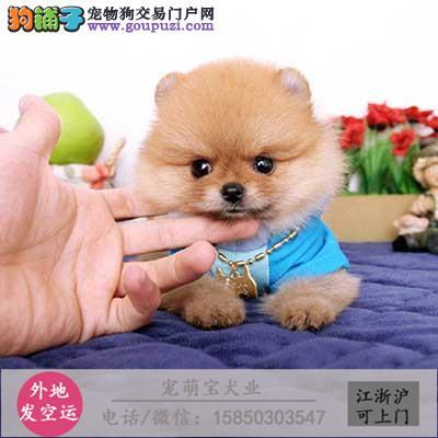 cku认证犬舍出售极品 西施犬签协议保健康