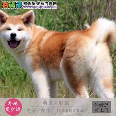 cku认证犬舍出售极秋田签协议保健康