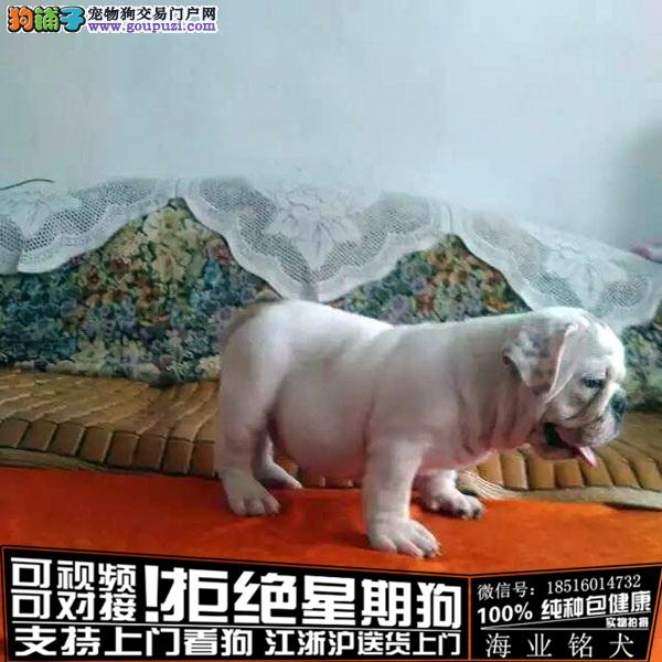 cku认证犬舍出售极品法牛 签协议保健康