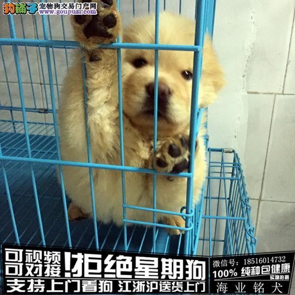 cku认证犬舍出售极品松狮签协议保健康