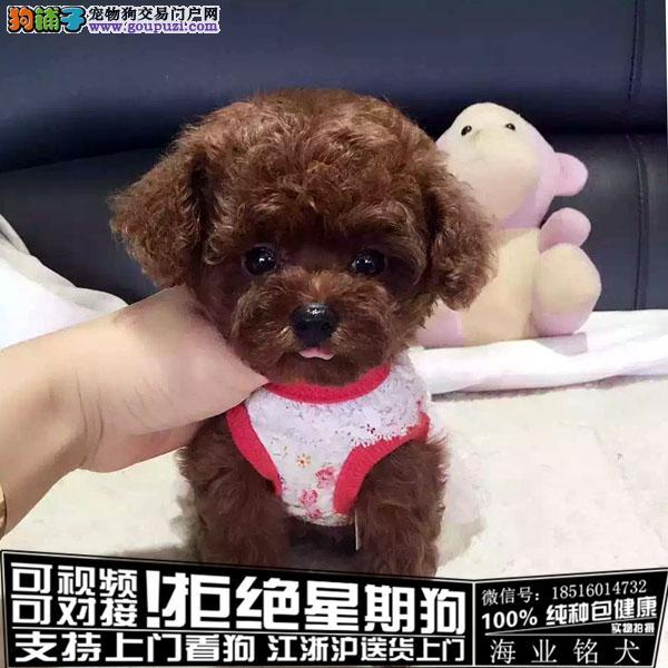 cku认证犬舍出售极品可爱泰迪 签协议保健康