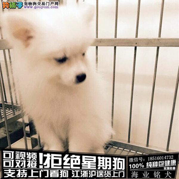 cku认证犬舍出售极品银狐 签协议保健康
