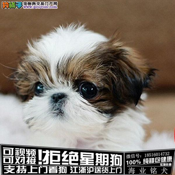 cku认证犬舍出售极品西施犬 签协议保健康