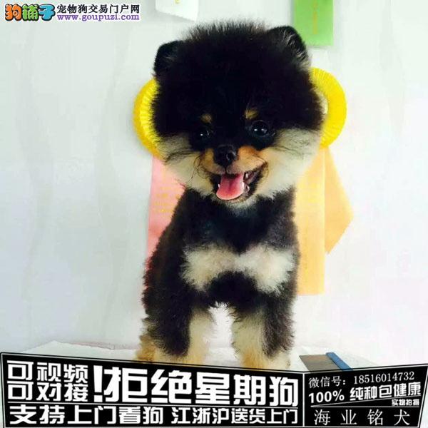 cku认证犬舍出售博美幼犬签协议保健康