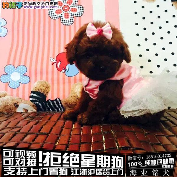 cku认证犬舍出售极品茶杯泰迪 签协议保健康