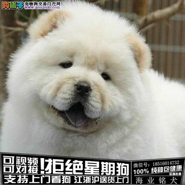 cku认证犬舍出售极品松狮多 签协议保健康