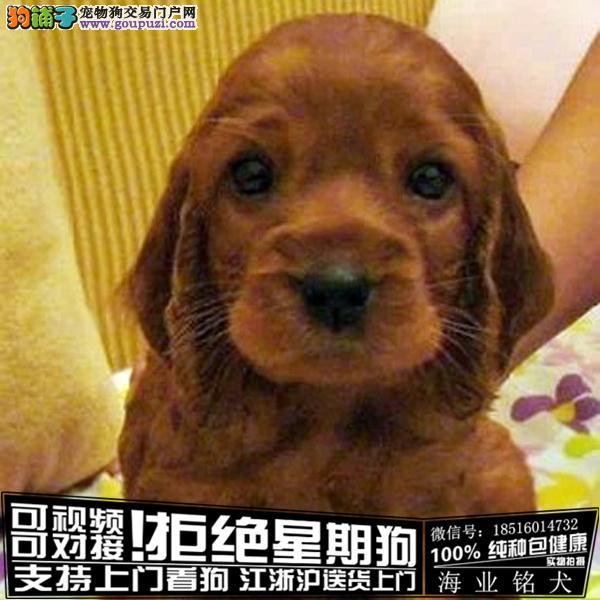 cku认证犬舍出售极品可卡犬 签协议保健康