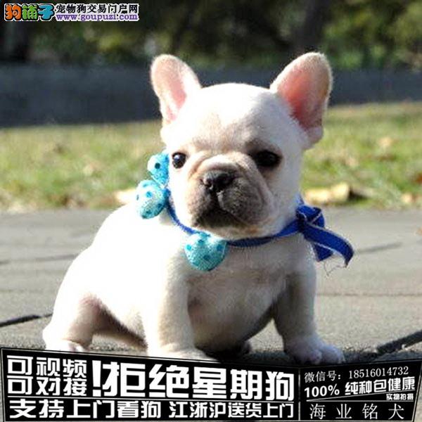 cku认证犬舍出售极品法牛签协议保健康