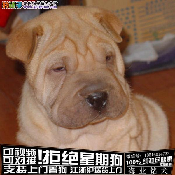 cku认证犬舍出售极品沙皮 签协议保健康