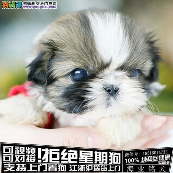 cku认证犬舍出售极品西施犬签协议保健康