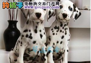 国内最具规模的斑点犬舍,保纯种保健康 可签购犬协议