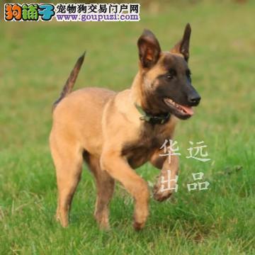 权威机构认证犬舍、马犬专业繁殖 完美售后