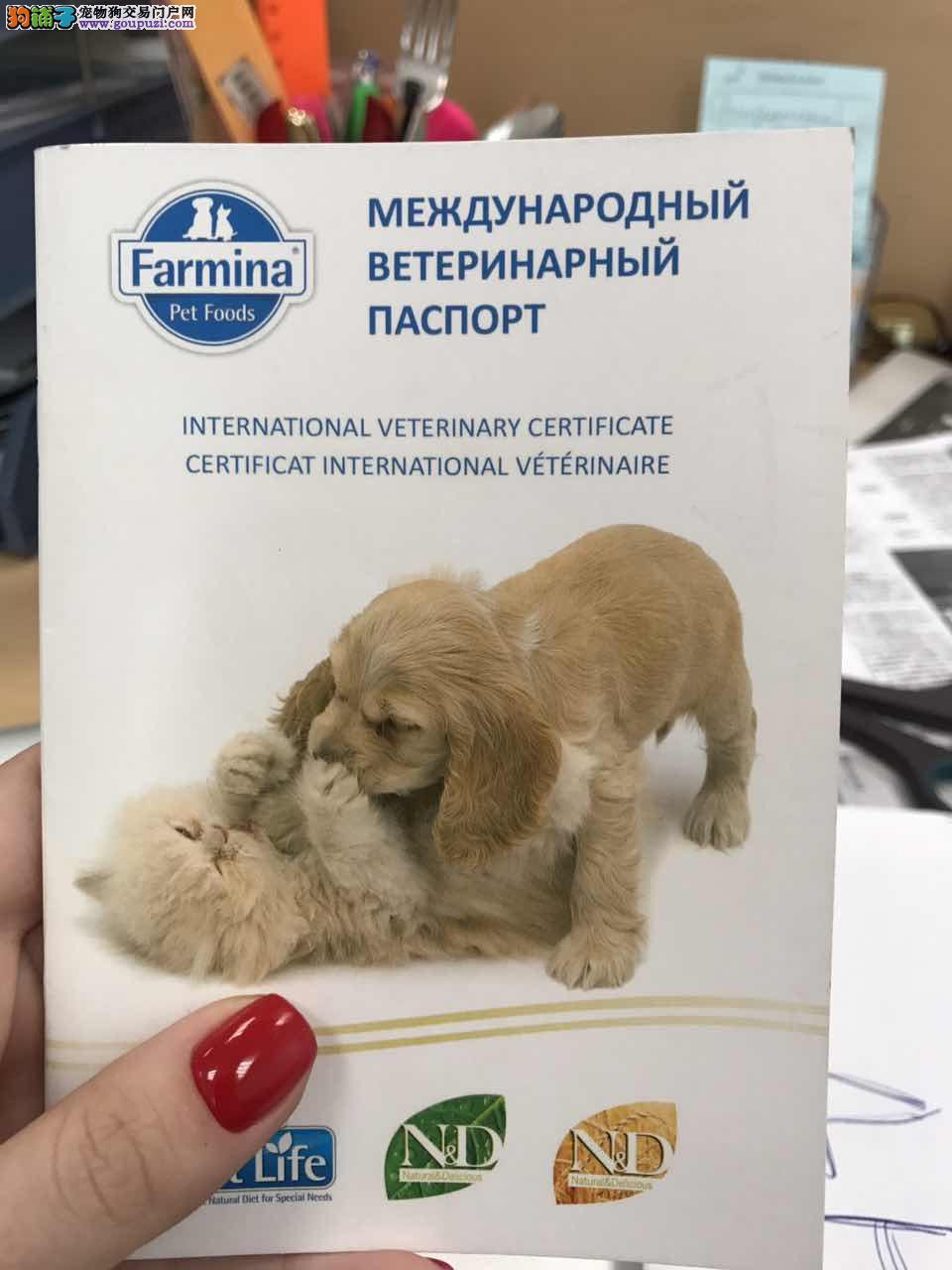 俄罗斯各大犬舍世界名犬代购
