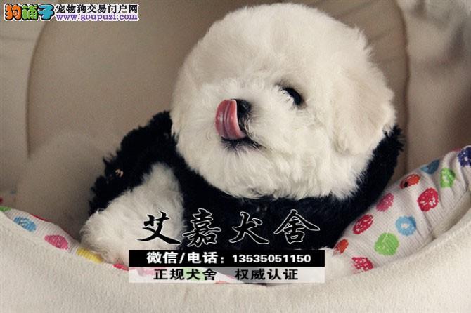 请问比熊什么价钱 江门哪里有卖比熊犬多少钱