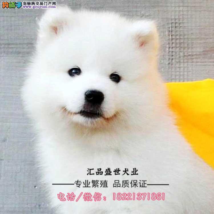 今天付款包邮漂亮可爱的大白熊犬 赛级大白熊幼犬