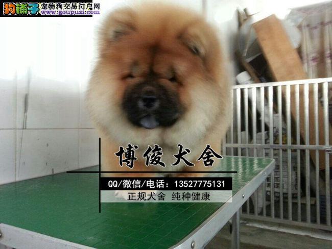 松狮犬、支持上门选狗、支持送狗上门、送喂养资料