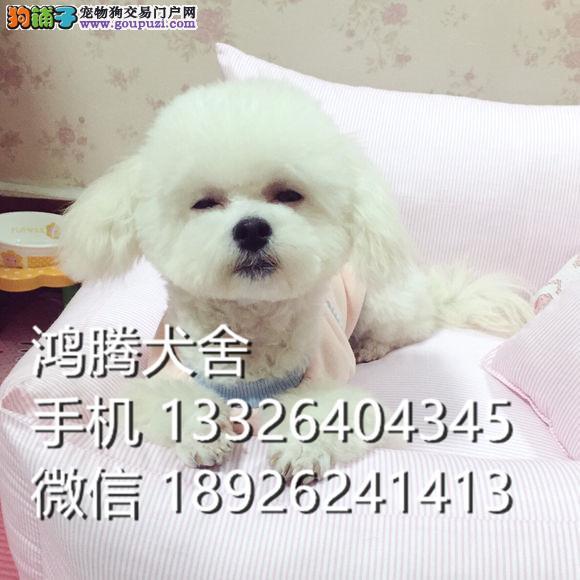 东莞哪里有卖比熊犬价格多少比熊犬好养吗