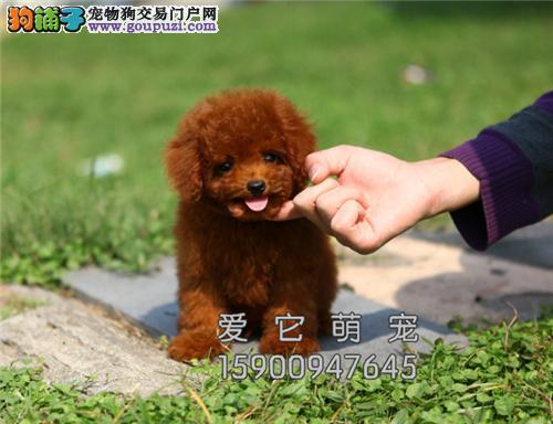 重庆犬舍阿拉斯加小雪橇犬送用品全国发货