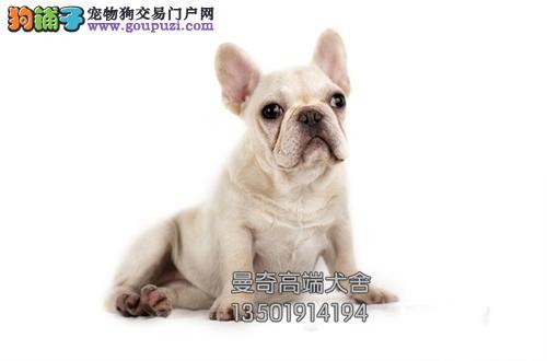 广东专业繁殖法牛极品出售幼犬全国发货