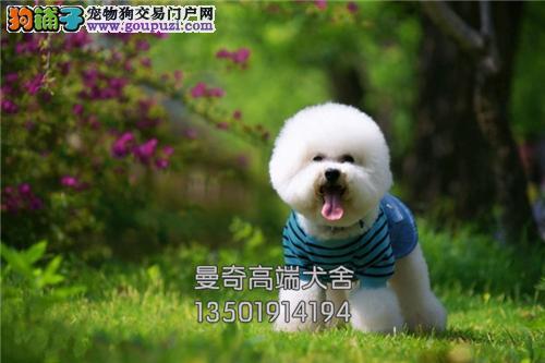 广东哪里有比熊好养雪白下单有礼全国发货