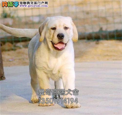 广东马犬精品服从性好全国包运全国发货
