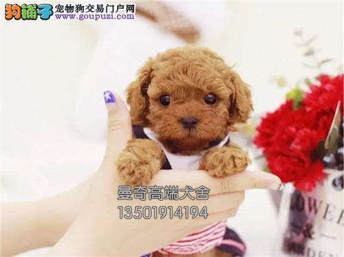 西藏泰迪健康聪明小熊保健康全国发货