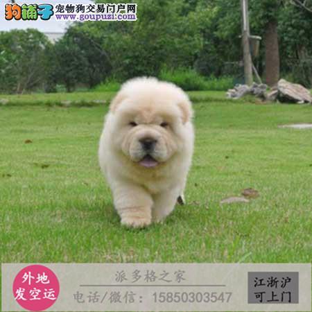 cku认证犬舍出售高品质 松狮宝宝签协议证件齐全