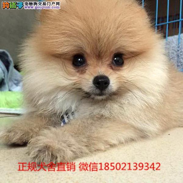 cku认证犬舍出售高品质 俊介宝宝签协议证件齐全