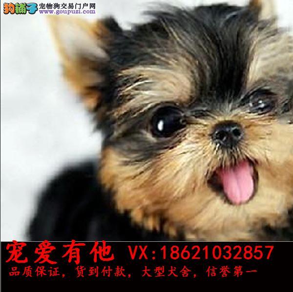 高品质出售宠物狗狗 保纯种 保健康