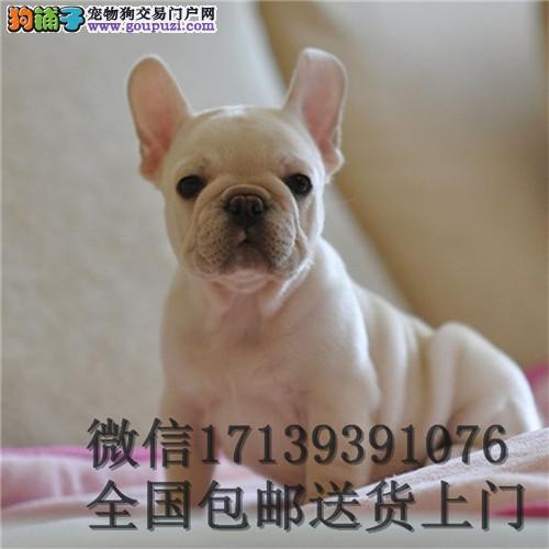 法国斗牛犬 纯种法牛狗 活体宠物狗狗 双血统奶白色幼