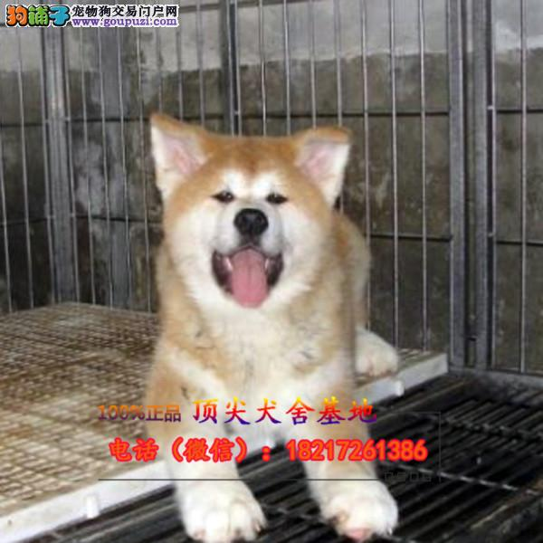 正规狗场 犬舍直销 纯种大丹犬 真实照片包纯