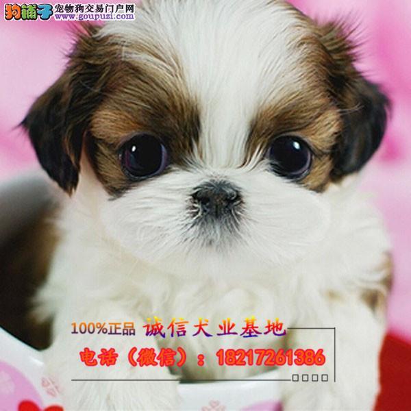 本地繁殖精品蝴蝶幼犬便宜出售,包纯包健康包养活