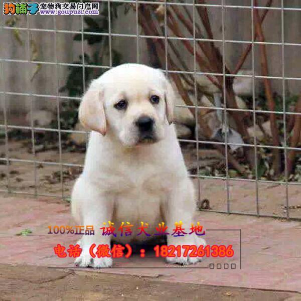 养殖场直销狗狗幼犬包养活签协议上门可选