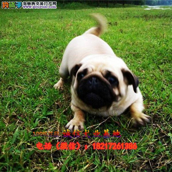 正规狗场 犬舍直销 纯种各种幼犬 真实照片包纯