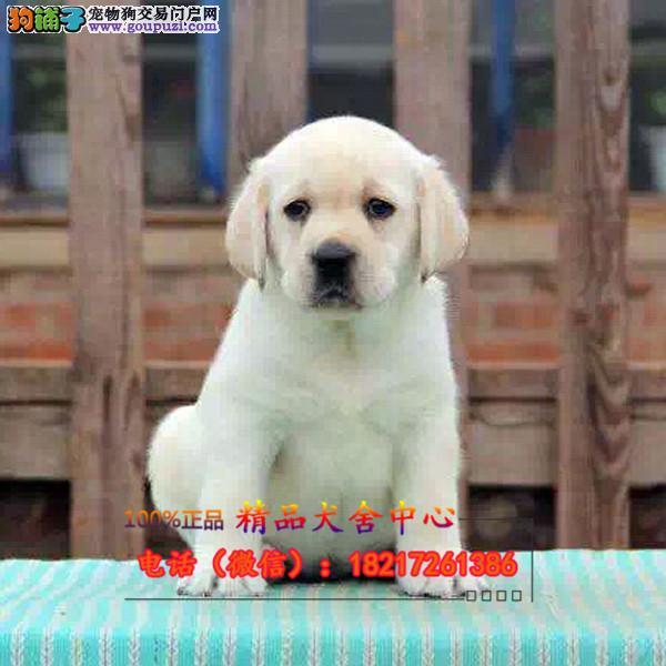 养殖场直销 宠物狗狗幼犬包养活签协议上门可选