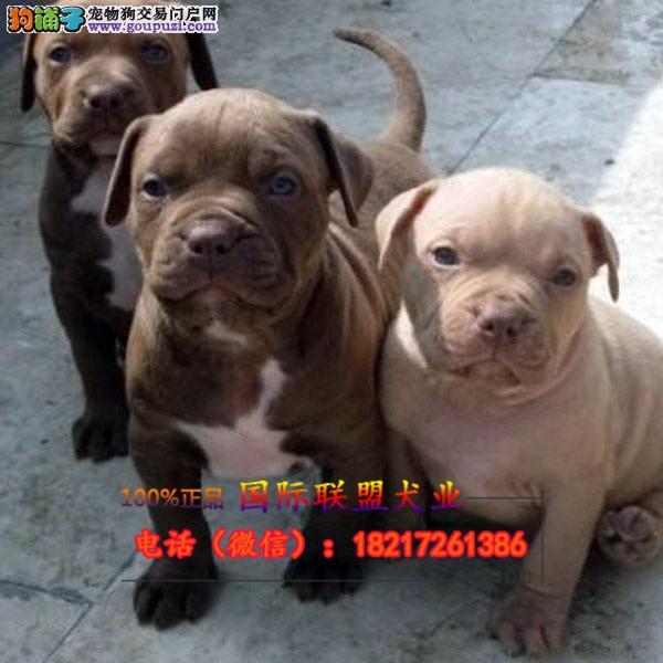 养殖场直销 幼犬包养活签协议上门可选