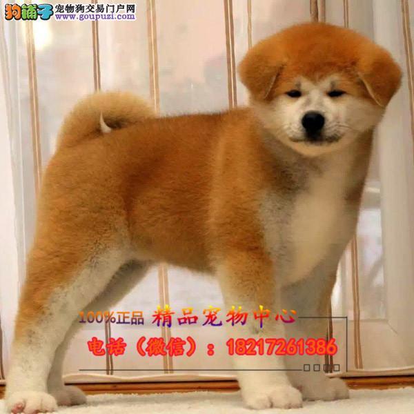 养殖场直销 秋田幼犬包养活签协议上门可选