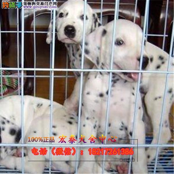 养殖场直销斑点狗 幼犬包养活签协议上门可选