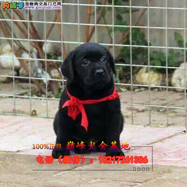 正规狗场 犬舍直销 纯种拉拉犬 真实照片包纯