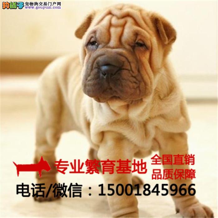 出售纯种沙皮狗巴哥犬/签协议包健康/买狗送用品狗粮