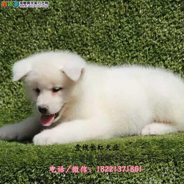 斑点狗幼犬、大麦町犬、黑斑、红斑狩猎犬野兔、雉鸡