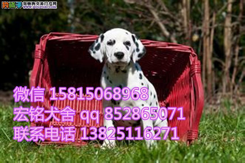江门卖狗的地方 江门在哪里有卖斑点狗
