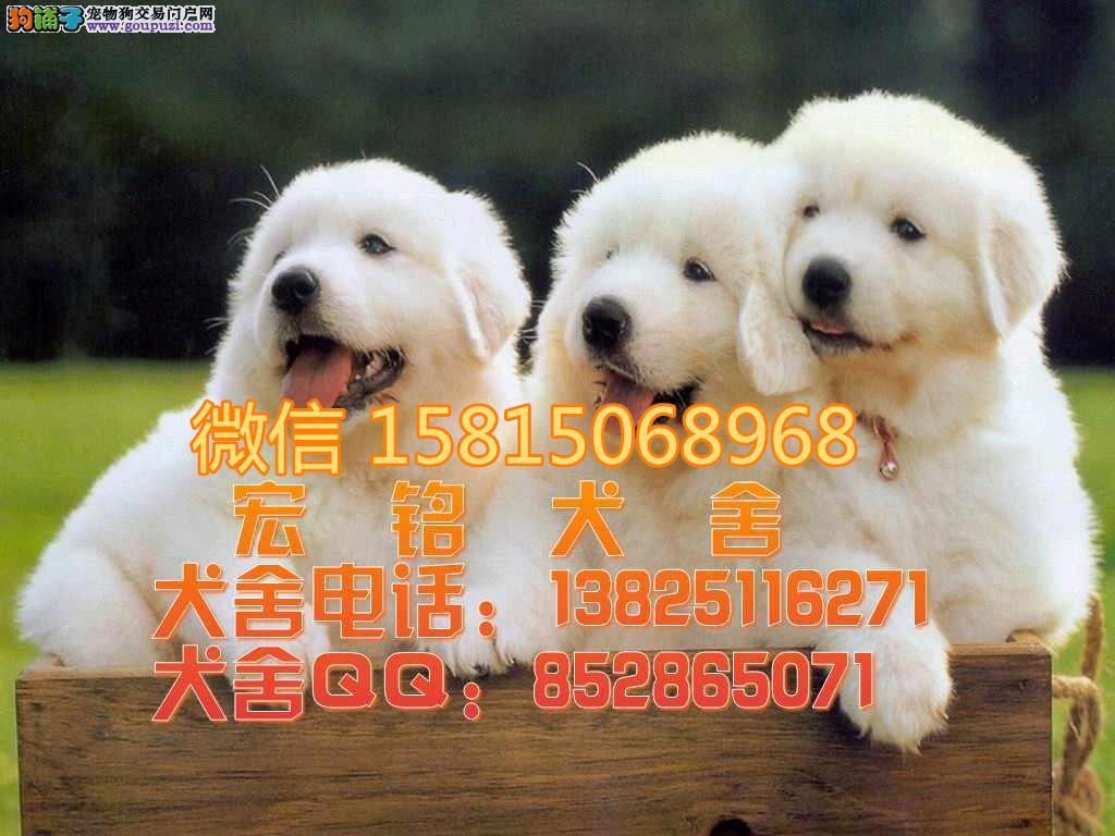江门哪里有卖大白熊 江门什么地方有大白熊买