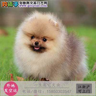 犬舍直销高品质纯种哈士奇全国包邮