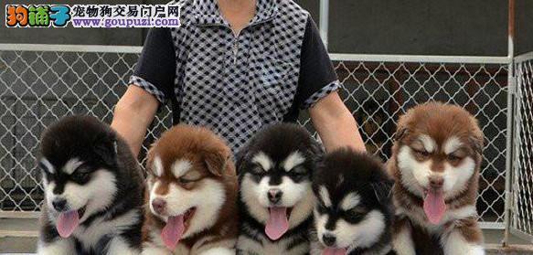 只为爱狗人士繁育一份安心,,少份担心与操心.健康