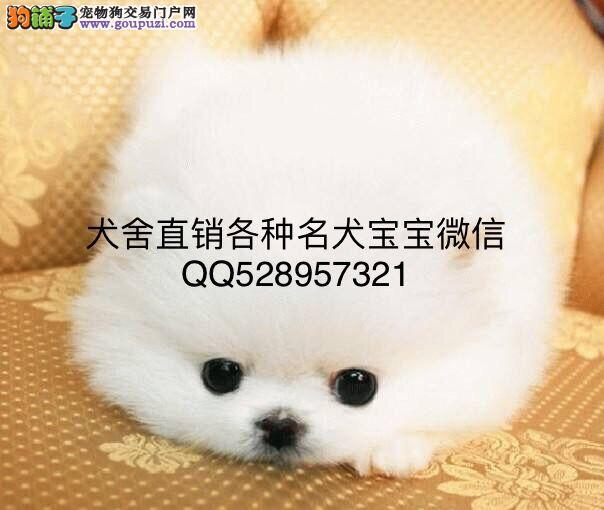 霸天犬舍 出售各种名犬宝宝 签订协议 AKC CKU共同认证