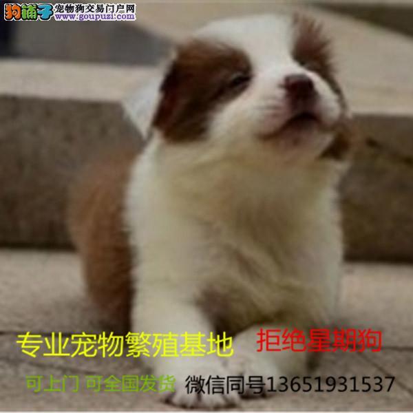 养殖场直销宠物狗狗幼犬包养活签协议上门可选