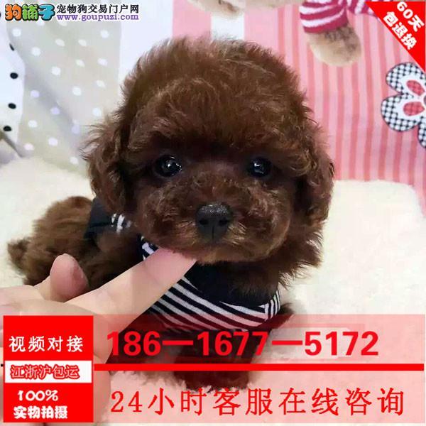 自家养的泰迪犬 颜色齐全 全国发货